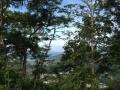 Monkey Hill