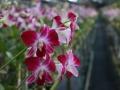 0Сад орхидей4