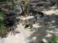 Крокодилы греются на солнышке