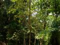 Летучие лисицы висят на деревьях на острове №4